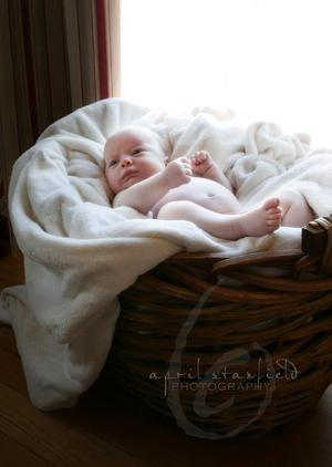 Jude_in_basket_cropsmall